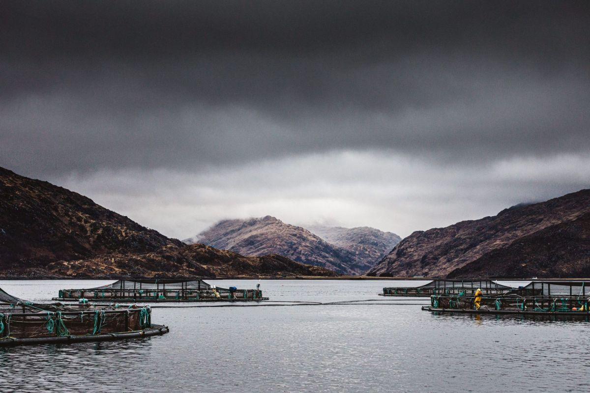 Scottish sea loch salmon farm