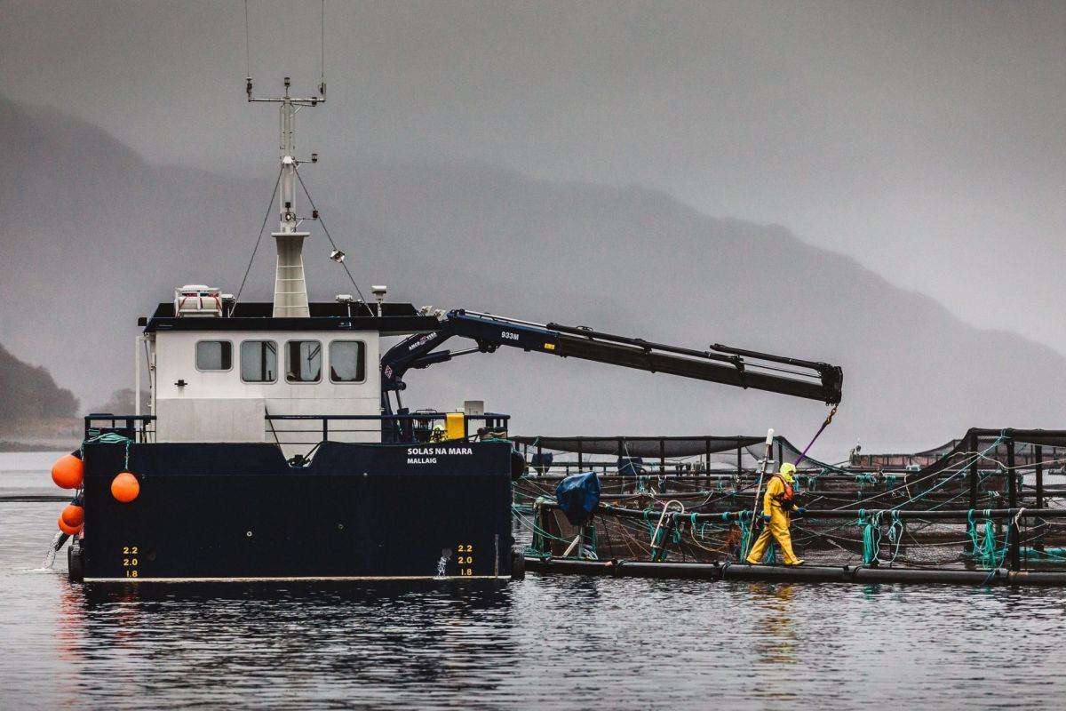 salmon farm Scotland