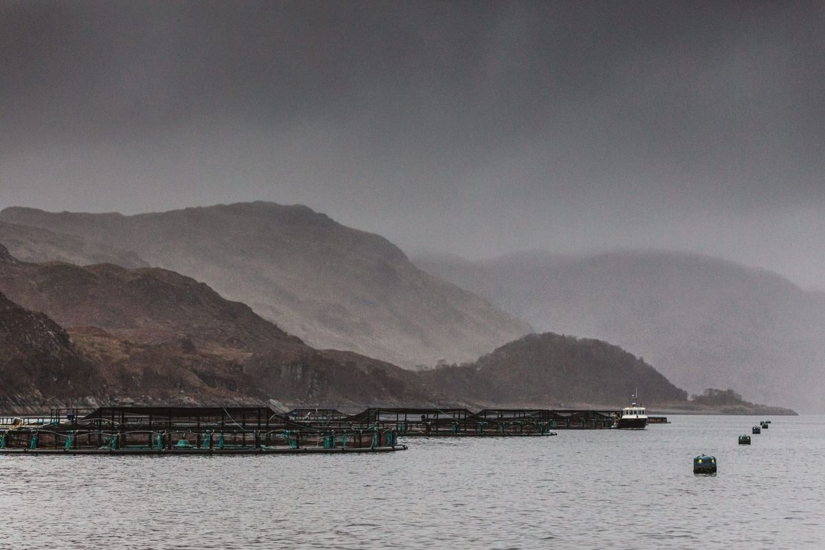 misty loch salmon farm