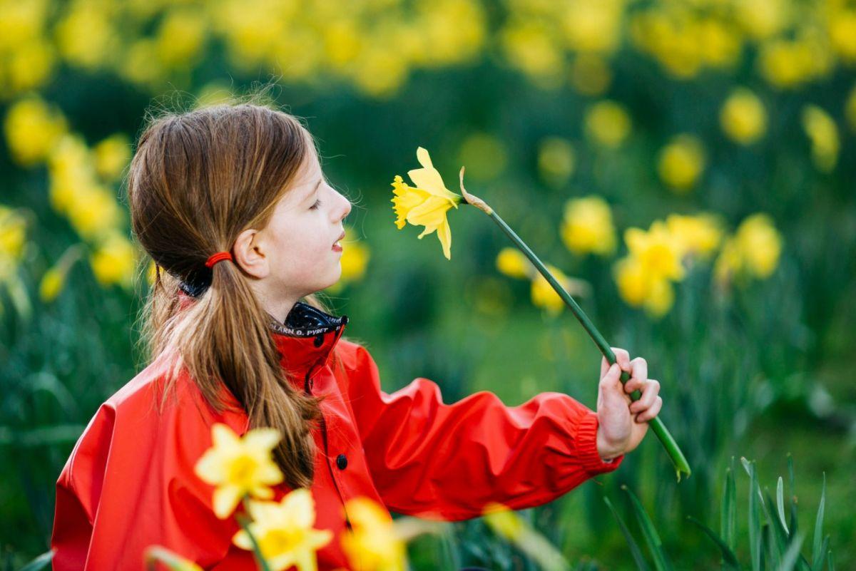 south inch perth daffodils