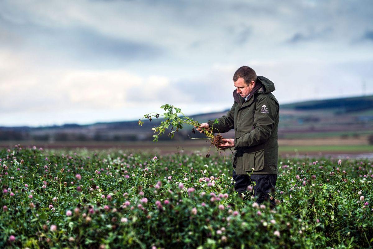 Agronomist checking crop