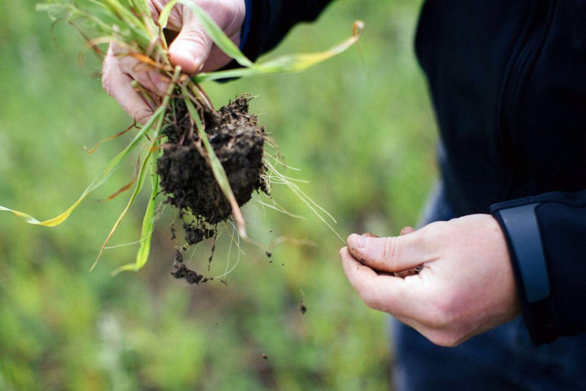 cover crop trials