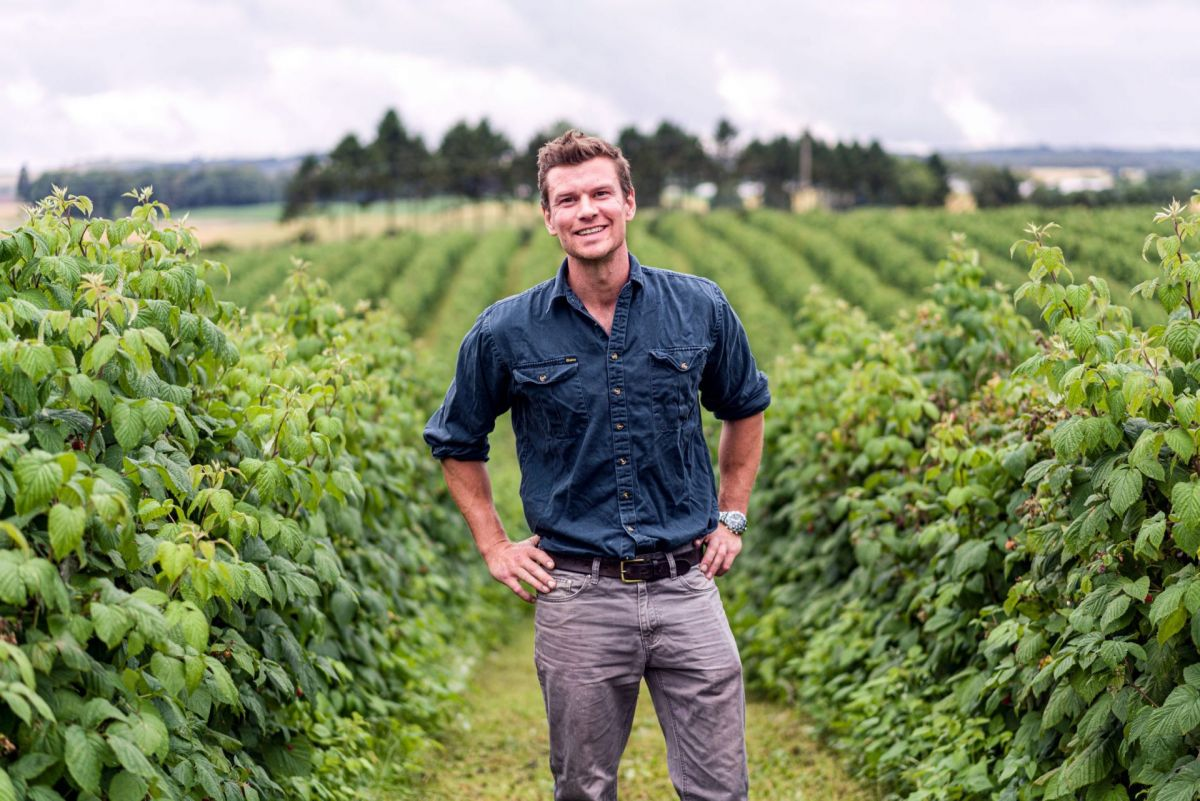 soft fruit producer in field of rasps