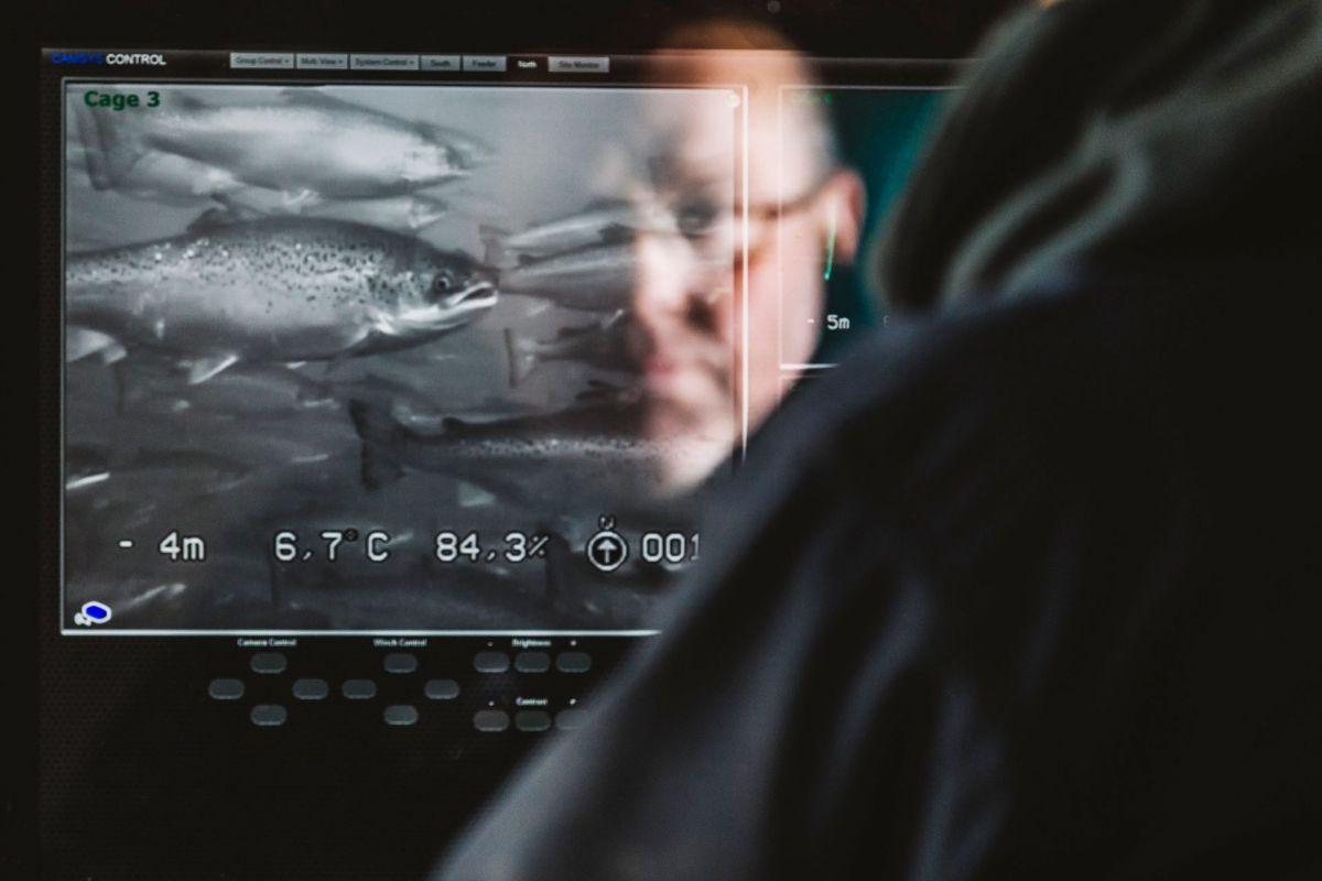 salmon feeding screen