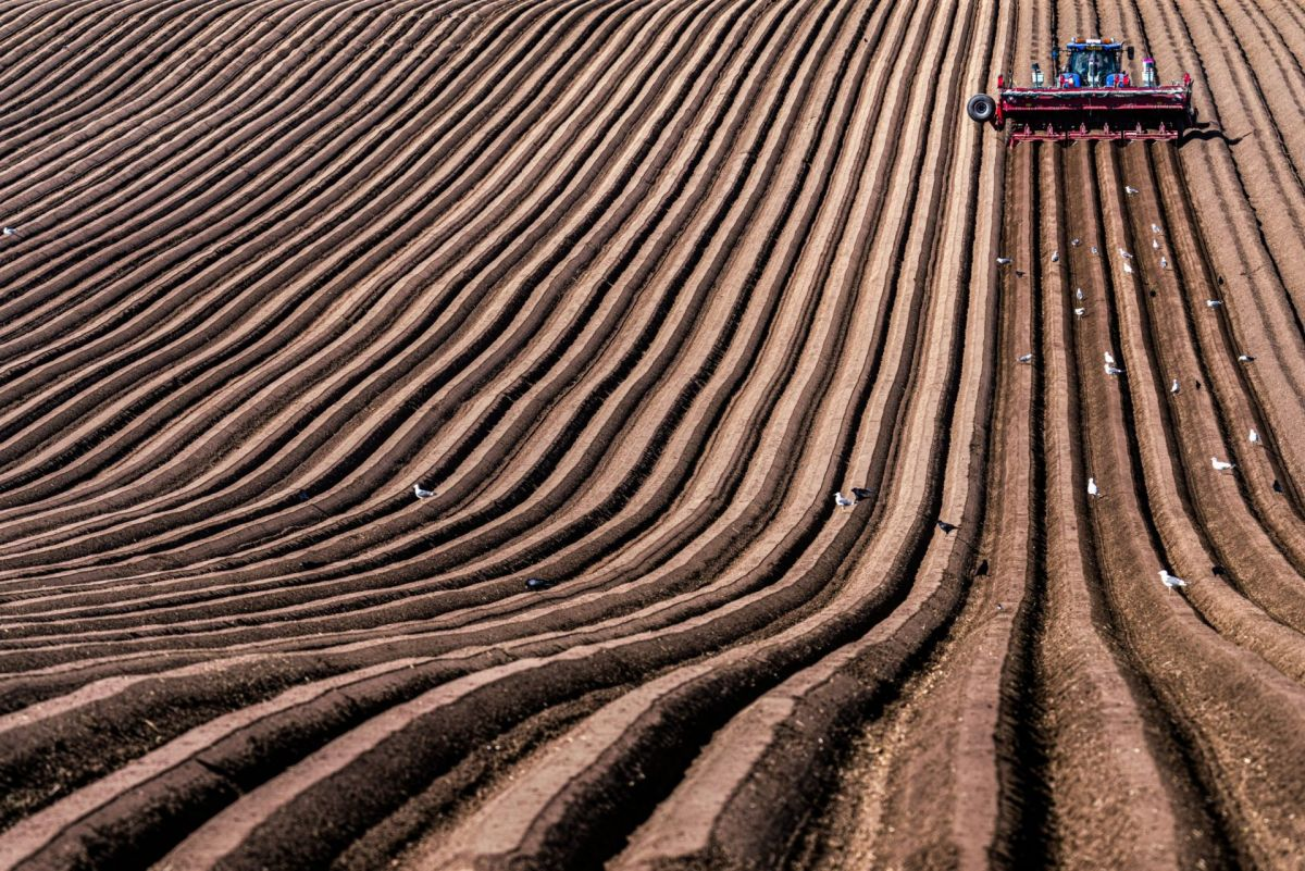 wide shot of tractor sowing potatoes